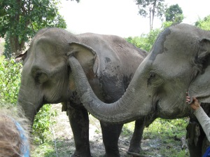 Kam Moon touches her mother, Kam Suk.  Kam Moon never strays far from her mother.
