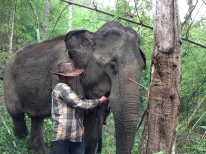 Kam Suk.  Her mahout is feeding her bark.