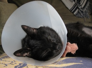 Bandit recovering in 2010. Somehow taking care of him...